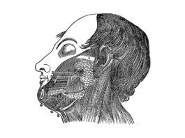 ghiandole salivari