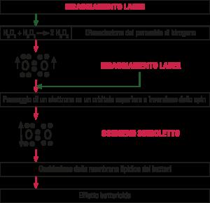 Fig. 6. Effetto decontaminante del laser associato al perossido d'idrogeno 10 volumi 3%.